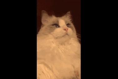 """Как взорвать ум вашего кота: переделка к посту - <a href=""""http://pikabu.ru/story/_3121481"""">http://pikabu.ru/story/_3121481</a>"""