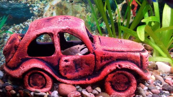Купили машину в аквариум... Но такого и на дорогах полно, с другой стороны