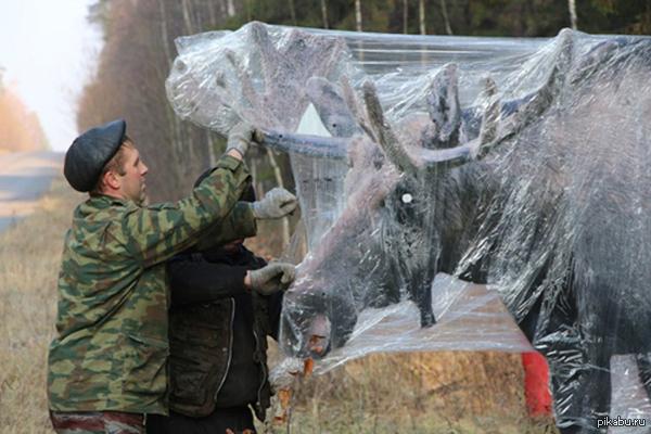 """Лоси """"присмотрят"""" за порядком ! В Мордовском заповеднике задумали обезопасить дороги около природной зоны и установили картонные макеты лосей размерами с реальное животное!"""