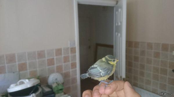 Нарушитель пойман! Сегодня поймал на кухне. Может кто подскажет, что за модель птицы?