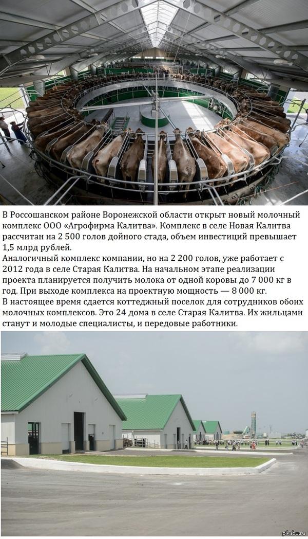 Новый молочный комплекс открыт в Воронежской области