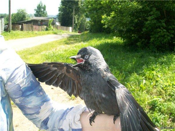 Весьма странная птица
