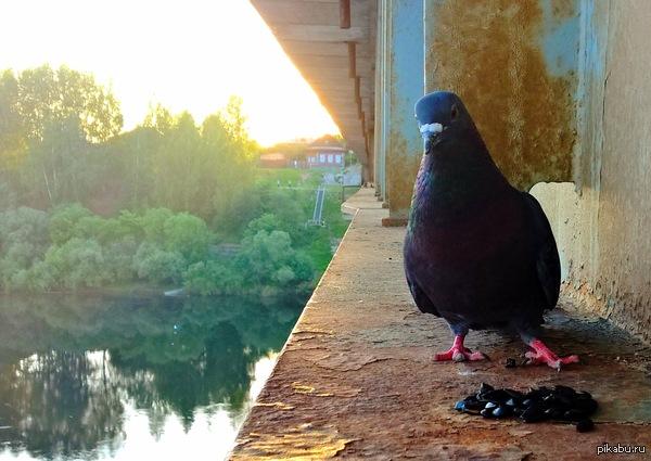 Одиночество... Оно такое... Этот парень вчера составил мне компанию. Фото сделано на опоре моста. Снято на Nokia Lumia 1520.