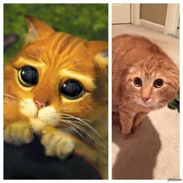 картинки кота из шрека глаза
