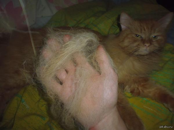 Погладил кота...