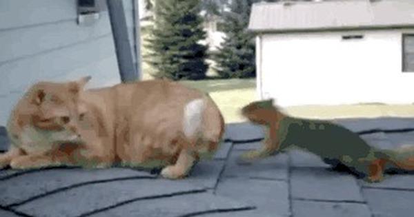 желаем гифка про кота и белку словам режиссера, гафт