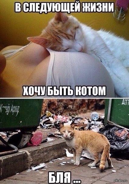 Картинки секс с котом