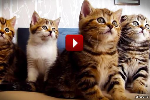 Котики лечат! Просмотр видео с котиками избавляет от негативных эмоций. Ссылка внутри.