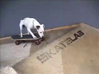 Пёсик любит экстрим