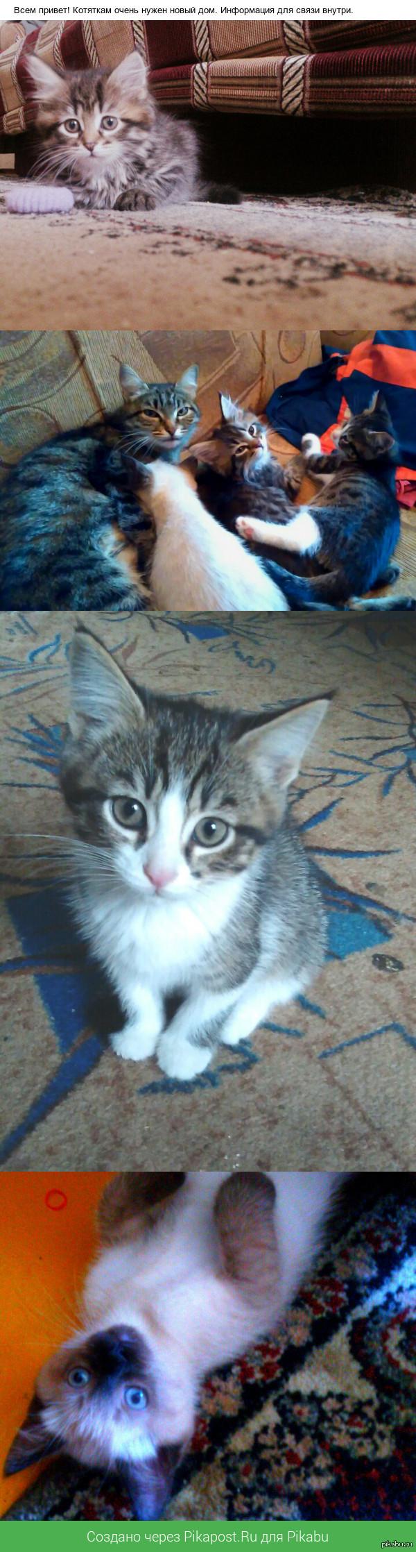 Отдадим котяток в добрые руки. Екатеринбург