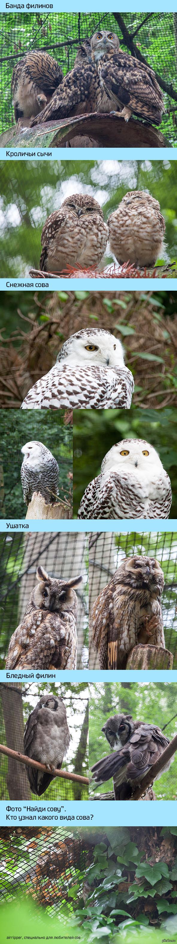 Снова совы Воскресные фото из зоопарка в польском городе Ополе.