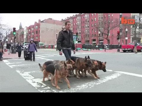 Водит парня на поводке видео