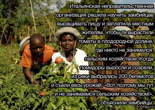 Сабираем урожай в пизде
