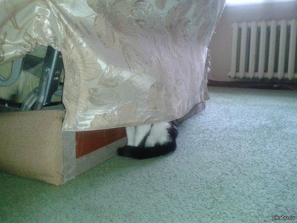 Кот, ты серьезно??? сидит там уже минут 40, а все из - за того что в соседней комнате меняют батарею..