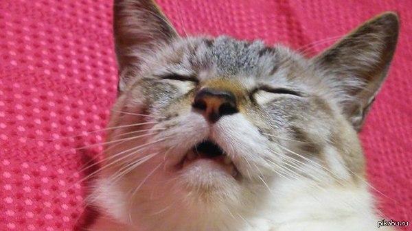 Когда собираешься чихнуть