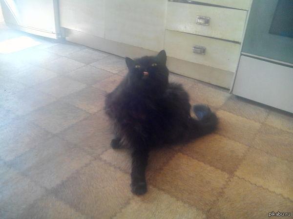 Вот такой у меня кот Зовём Черныш