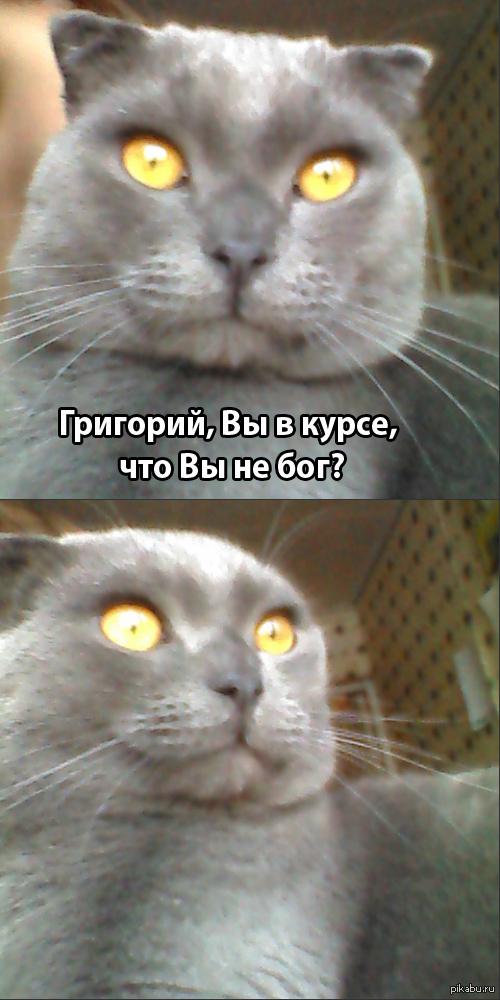Когда твой кот - косплеер