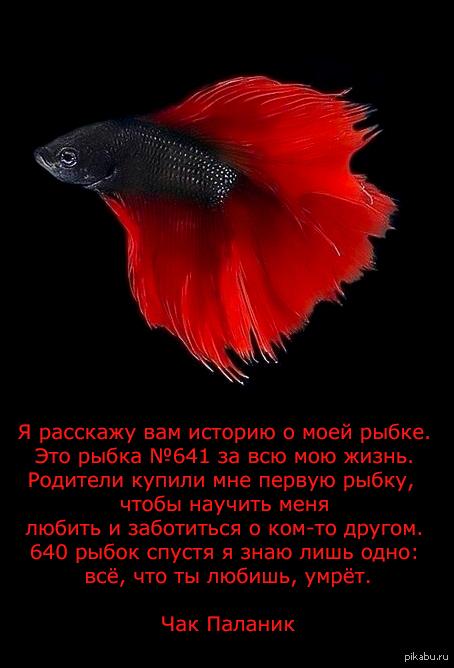 Всем бобра и рыбок
