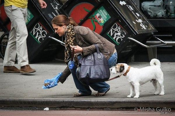 Киевсовет запретил выгул собак и котов на территориях школ, детсадов и больниц - Цензор.НЕТ 6355