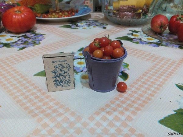 Наш урожай Собрали сегодня ведро помидоров)