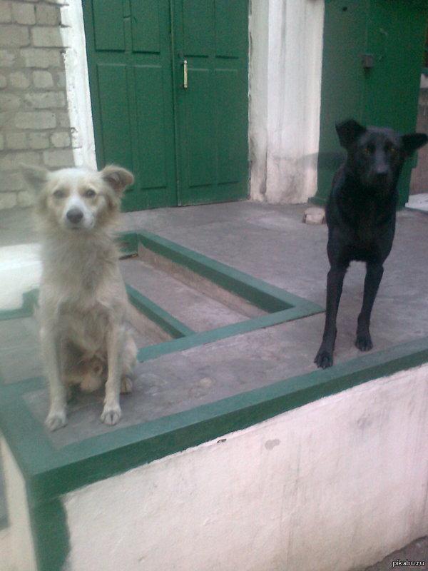 Еще раз о различии женской и мужской логики. Опыт на собаках. У соседей по работе, чисто женский коллектив, жили две эти собаки. Мы их звали: Белый и Черный. Естественно. Они: Аркадий и Николай. У меня все.