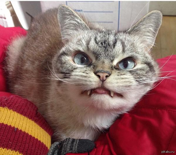 cat an