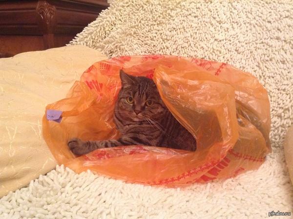 И снова кошка Не ожидал такой бурной положительной реакции на мою кошку. Вот вам на суд ещё одно фото. Влетела в пакет с разгона, но похоже, что ей там понравилось.