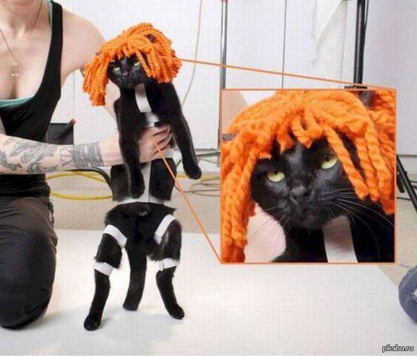 Кот из пятого элемента