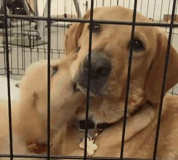 """""""Сначала вы посадили меня в клетку, а потом еще и щенка в нее пустили. Хозяин, не надо так..."""" Этот взгляд..."""