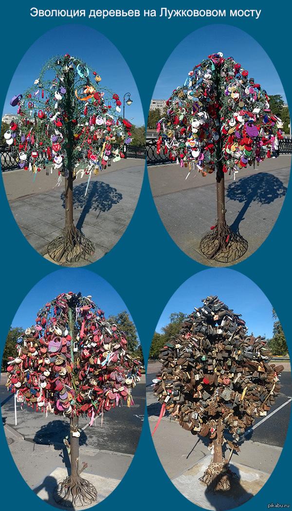 Эволюция деревьев на Лужковом мосту. Многие любят вешать замки на свадьбу, но, как мне кажется, даже не представляют как это выглядит через некоторое время.