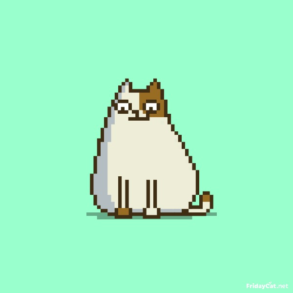 Пятничный Котик №15