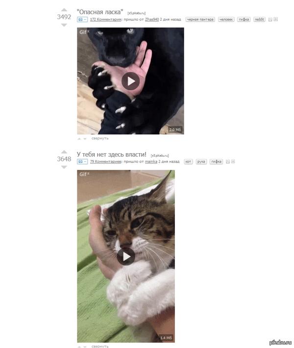 Котики и руки Два поста подряд