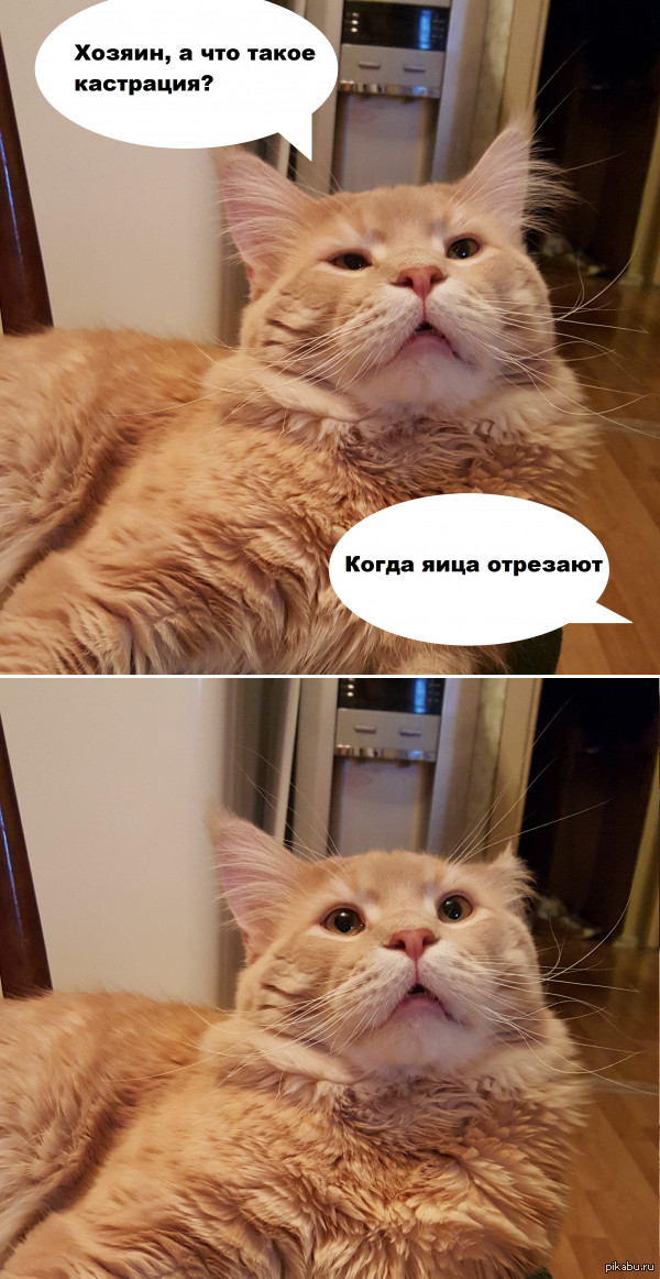 Ликбез для кота