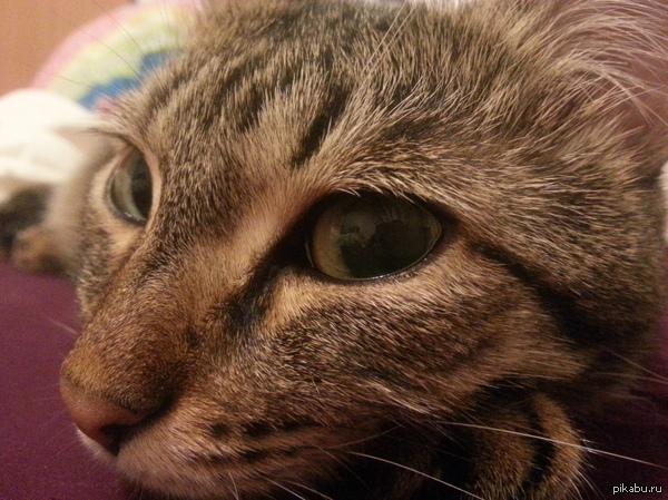 Кошака-подозревака