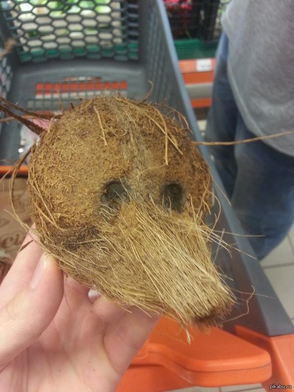 Кокос Хотел в супермаркете взять кокос, а попалось какое то непонятное существо