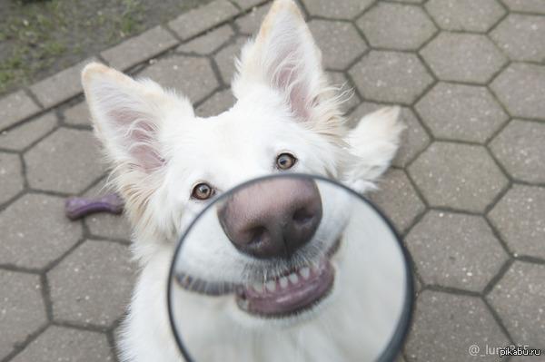 Собака-улыбака.