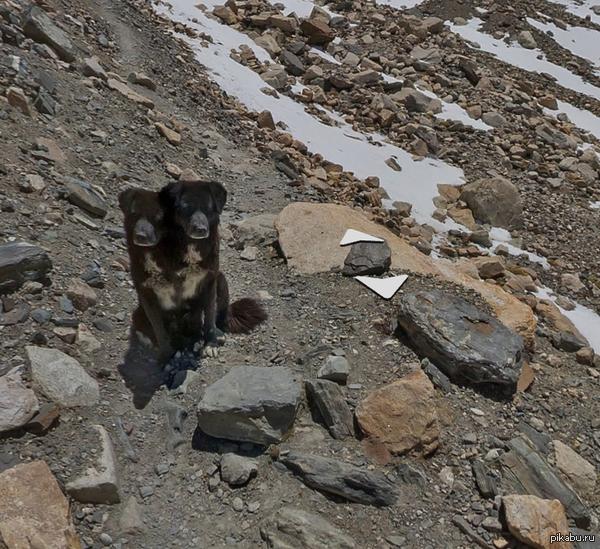 На Яндекс.Картах появились панорамы Эвереста и там происходит что-то действительно странное
