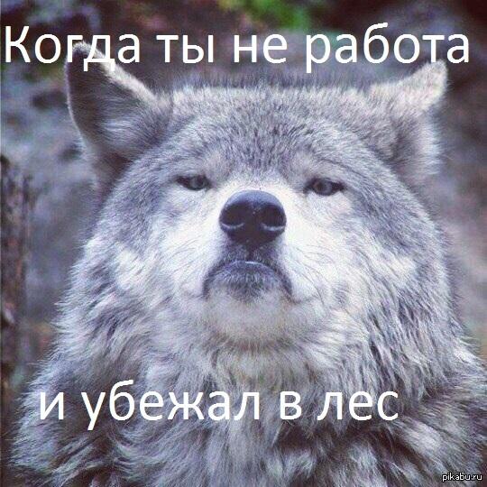 Работа не волк, в лес не убежит