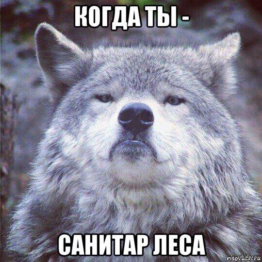 Волки - санитары леса