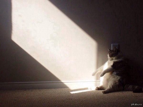 cat allergy wheezing treatment