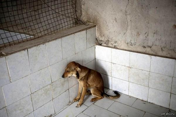 """Бедная пёса в приюте. Псов, которых не """"усыновили"""", вскоре усыпляют.  У нас есть возможность спасти хоть одного."""