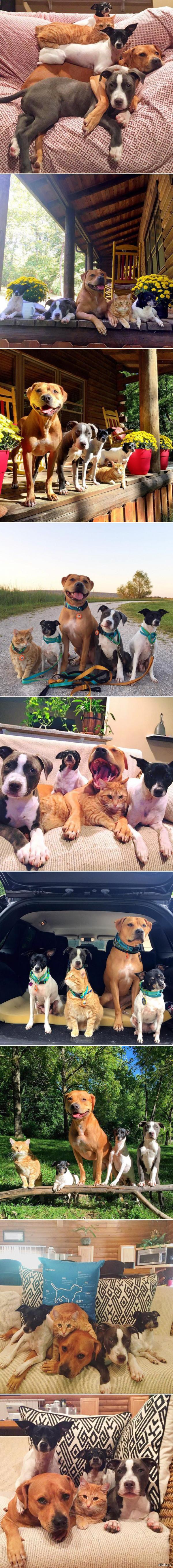 Великолепная пятерка друзей. Roxy, Edith, Mia, Rose и Jake.
