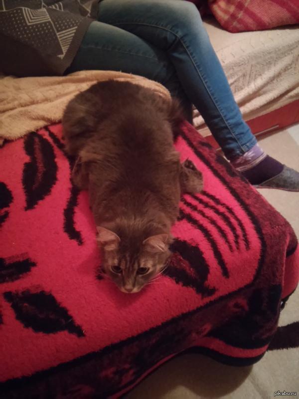 в душе она тюлень кошка моей девушки спит и лежит как тюлень.