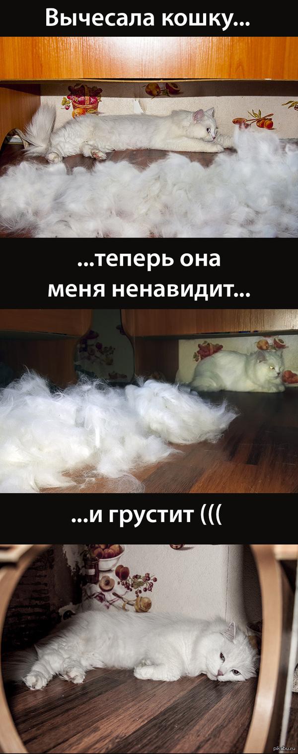 Вычесала кошку пакет пуха получился