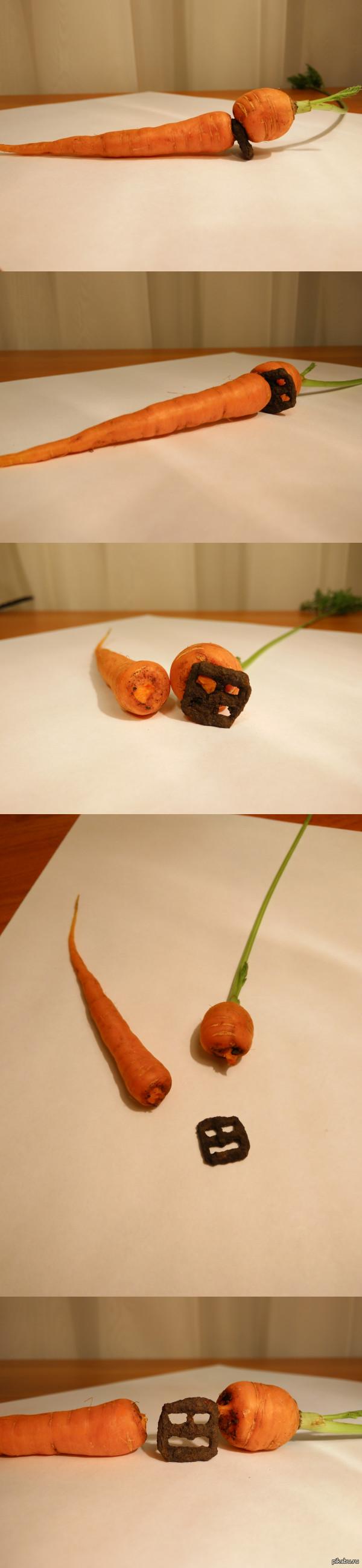 Волевая морковка Сегодня была выкопана морковка, проросшая через железную деталь.
