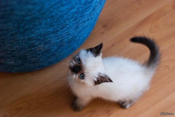 Yoba или Мафия? Завели мы с девушкой кошку. Я настаиваю на имени Yoba, ей нравится Мафия. Пикабу, выручай.