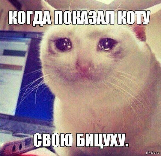 сети гуляют картинки с плачущим котом говорить слово нет была том, что