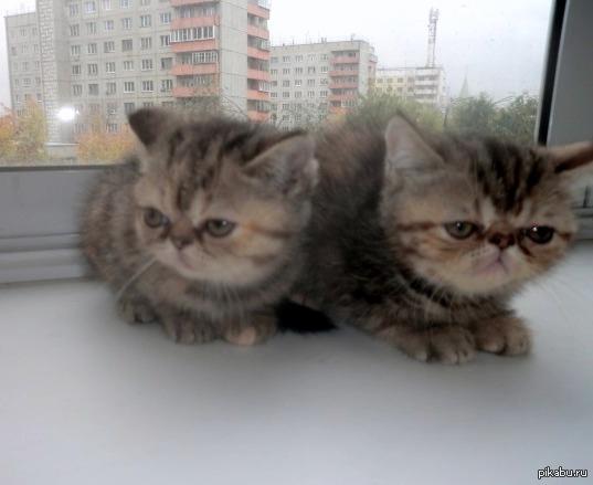 Просто разбавить сегодняшнюю тему дня... Котики грустят, потому что сегодня о них забыли, и говорят только о политике...