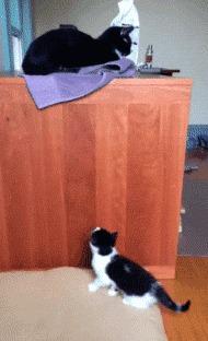 Очень целеустремлённый котёнок Внимание, длинная гифка