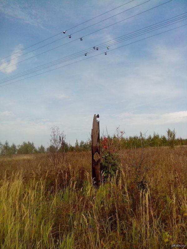 Птички на проводах На самом деле - просто изоляторы, оставшиеся от сгоревшего электрического столба.
